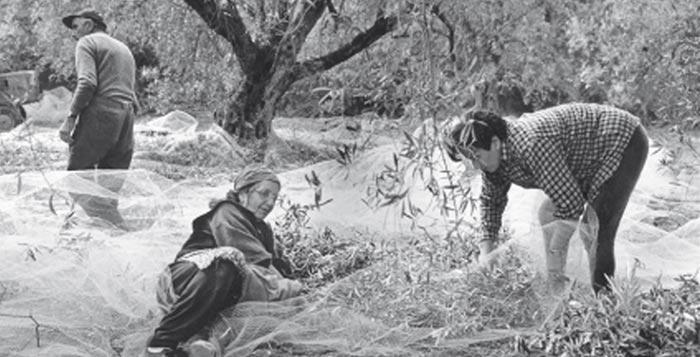 il pane delle donne soverato